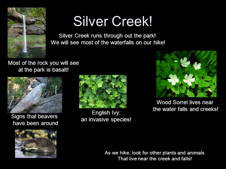 Silver Creek! Silver Creek runs through out the park! We will see most of the waterfalls on our hike! Most of the rock you will see at the park is bas