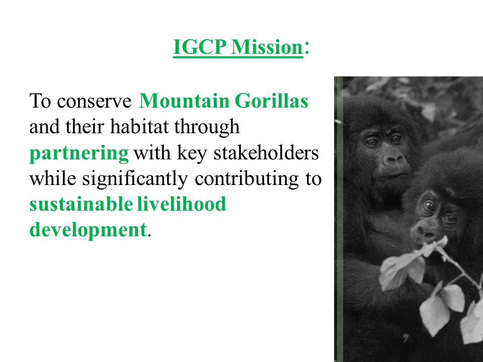 IGCP Mission : To conserve Mountain Gorillas and their habitat through partnering with key stakeholders while significantly contributing to sustainabl