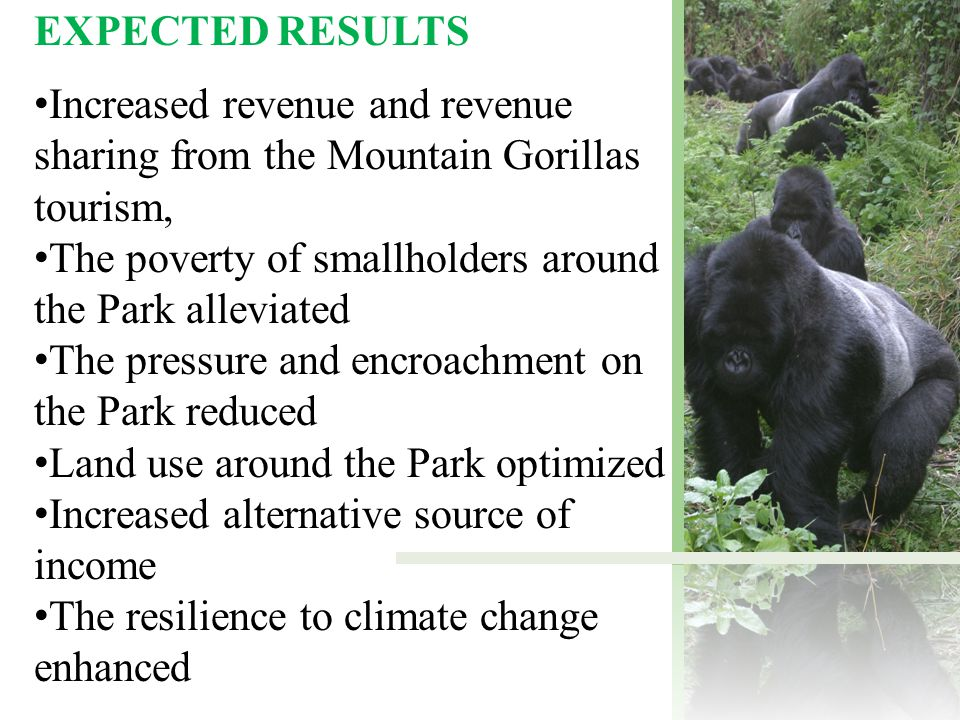 EXPECTED RESULTS Increased revenue and revenue sharing from the Mountain Gorillas tourism, The poverty of smallholders around the Park alleviated The