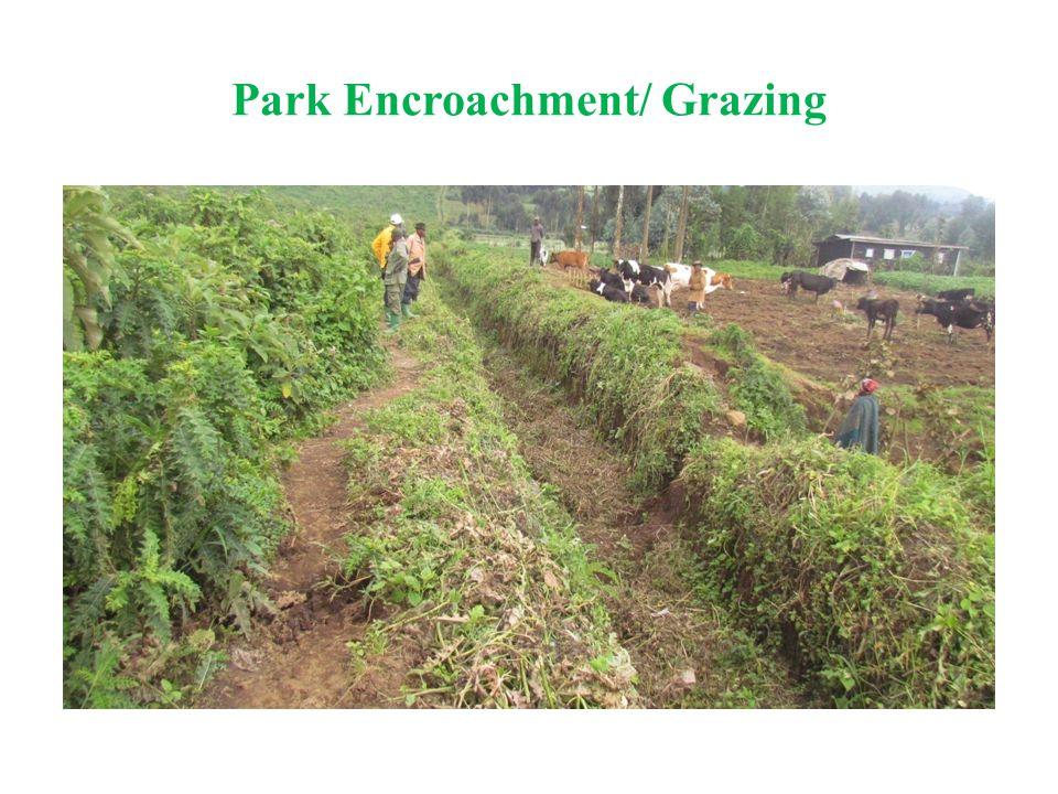Park Encroachment/ Grazing