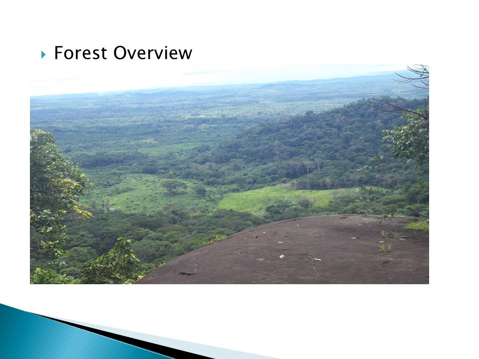 Forest Overview