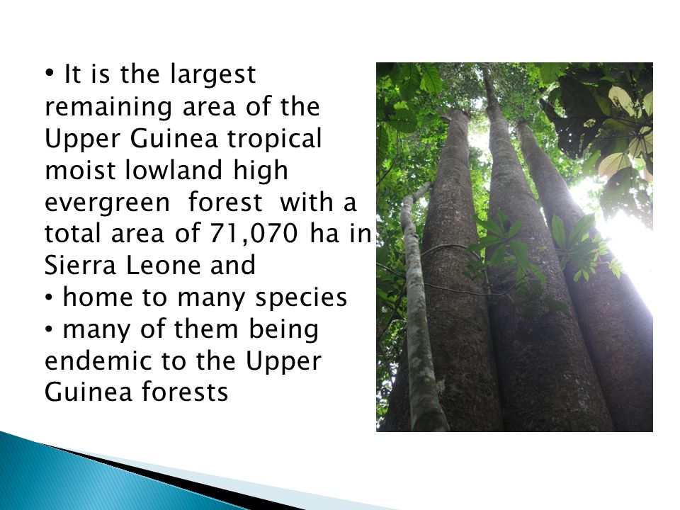 Total: 970 plant species / 599 endemic species 49 species of large mammals (Pygmy hippopotamus, African forest Elephant, Zebra duiker, Chimpanzee, Diana monkey and western red Colobus) 313 species of birds,18 conservation concern 43 species of amphibians some Bats and Butterfly species new to science For example: