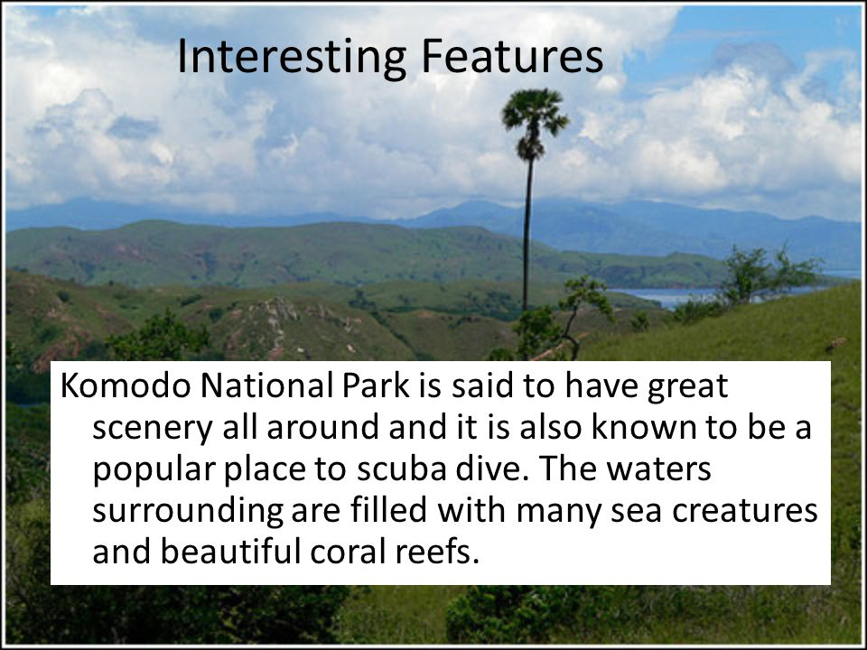 Interesting Features Komodo National Park is said to have great scenery all around and it is also known to be a popular place to scuba dive.