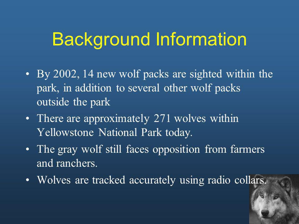 By 2002, 14 new wolf packs are sighted within the park, in addition to several other wolf packs outside the park There are approximately 271 wolves wi