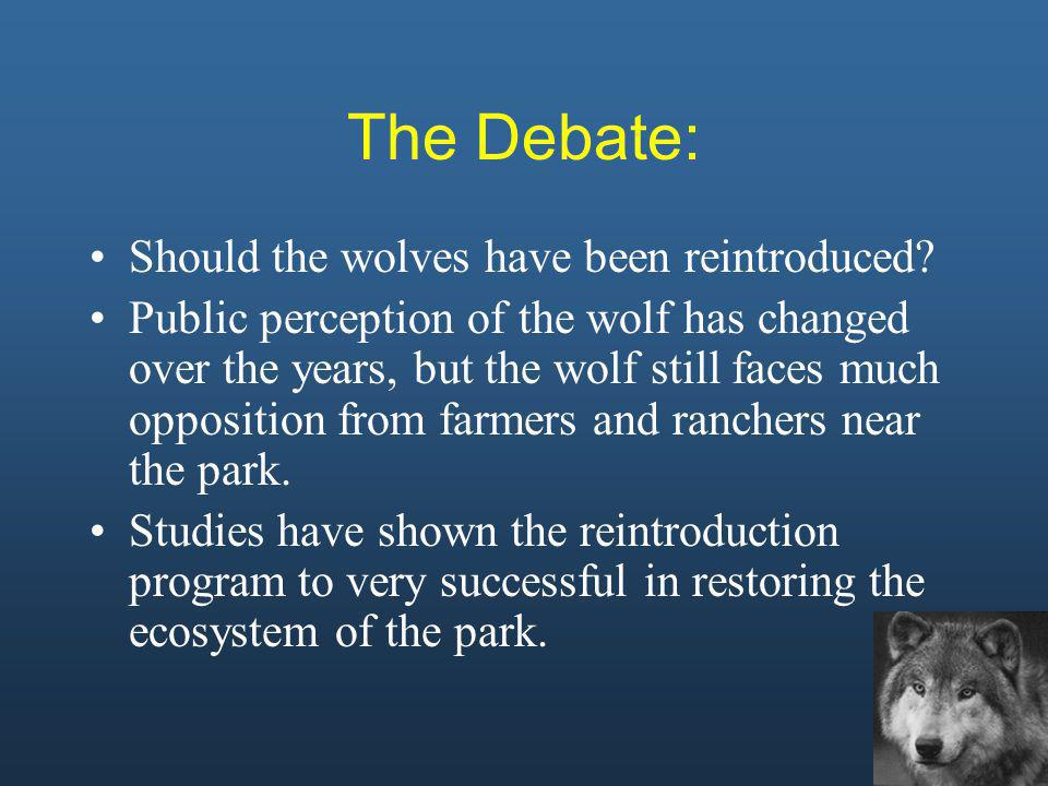 The Debate: After an absence of wolves for more than 60 years, it became evident to researchers that something was wrong with the ecosystem in Yellowstone.
