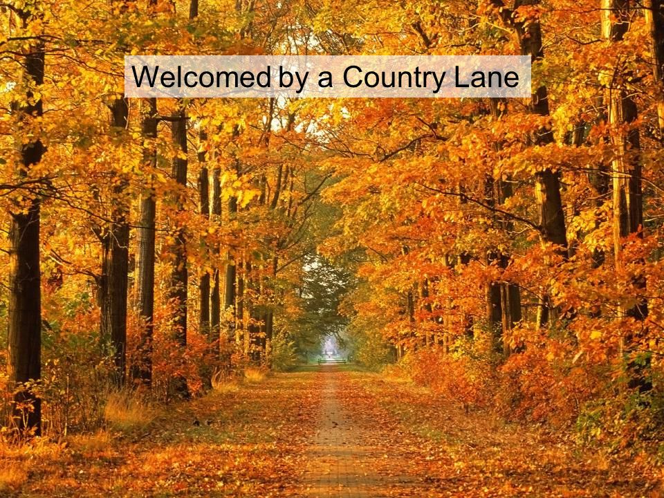 Welcomed by a Country Lane