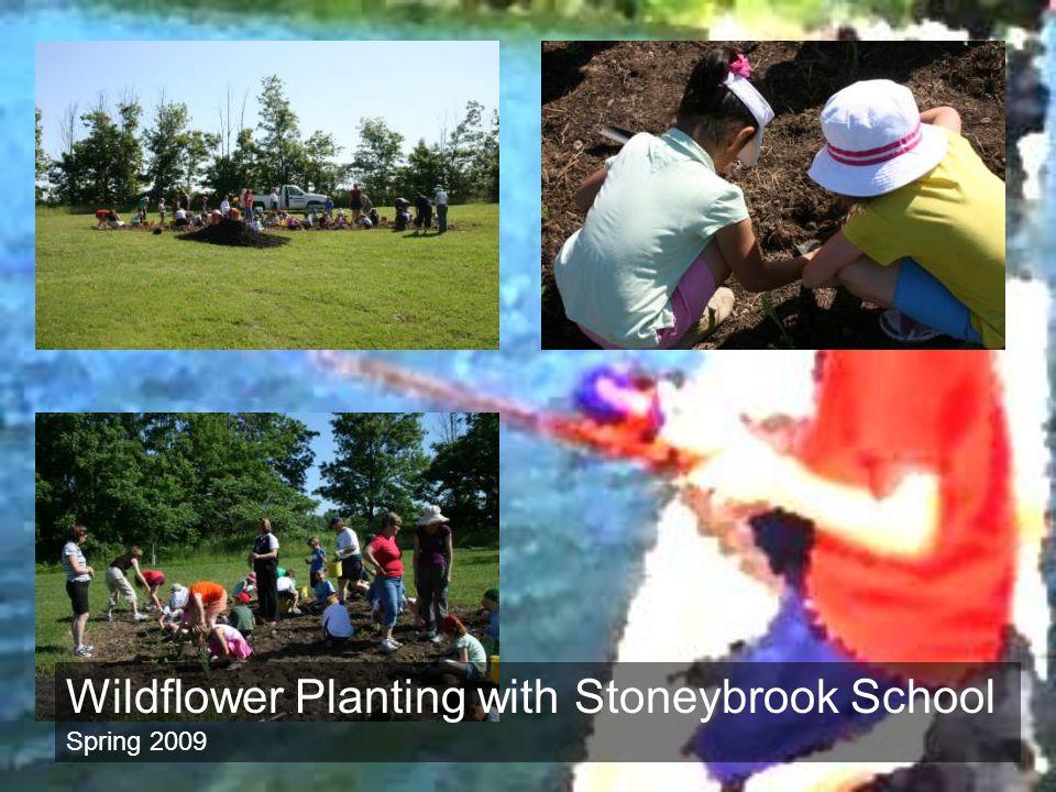 Wildflower Planting with Stoneybrook School Spring 2009
