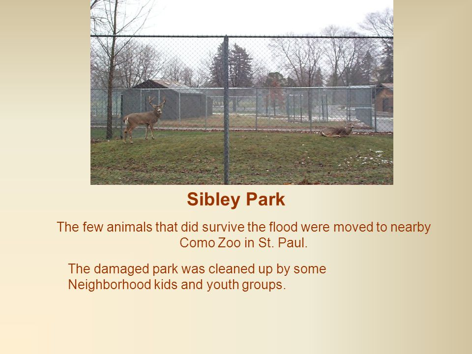 Sibley Park Of the more than 100 animals who were housed at the zoo at the time of the flood, only the larger ones survived.