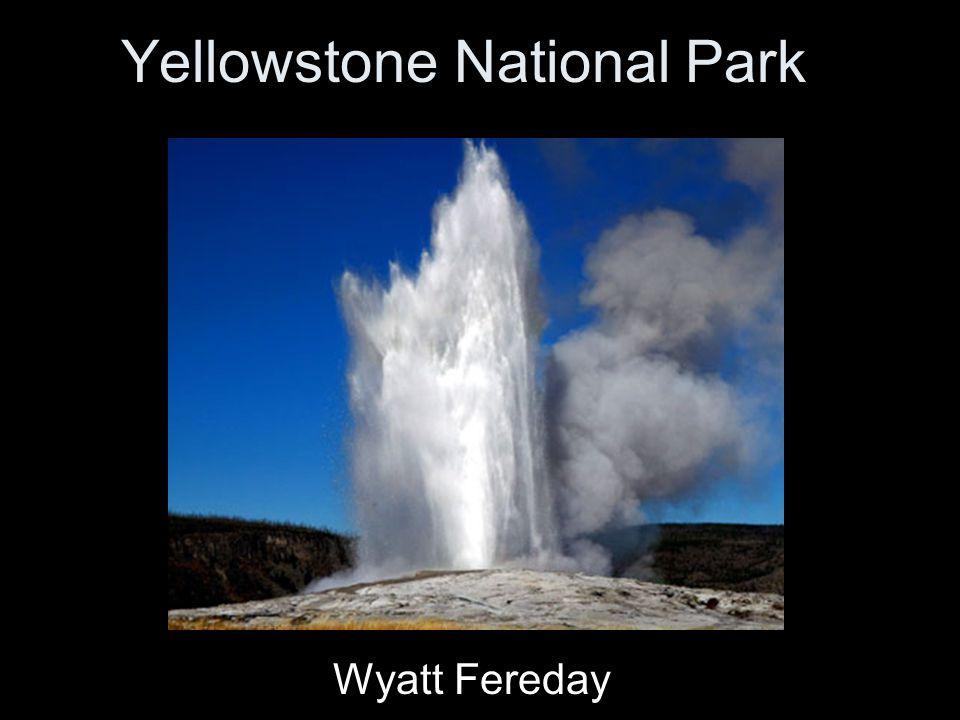 Yellowstone National Park Wyatt Fereday