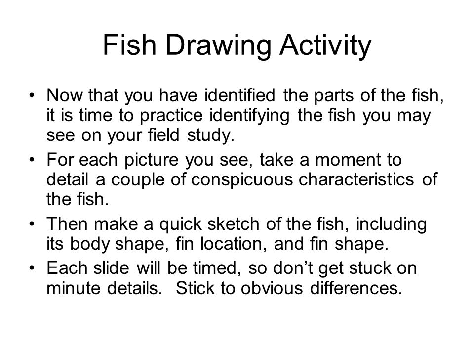 Fish Drawing Activity Now that you have identified the parts of the fish, it is time to practice identifying the fish you may see on your field study.
