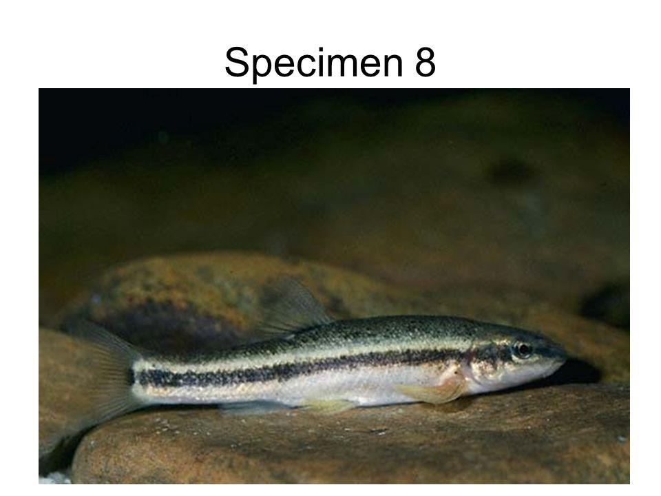 Specimen 8