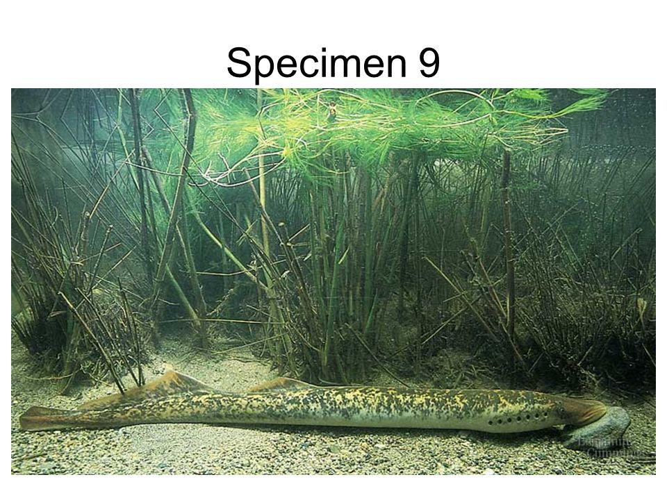 Specimen 9