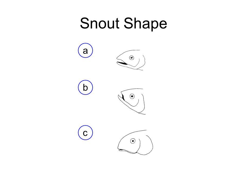 Snout Shape a b c
