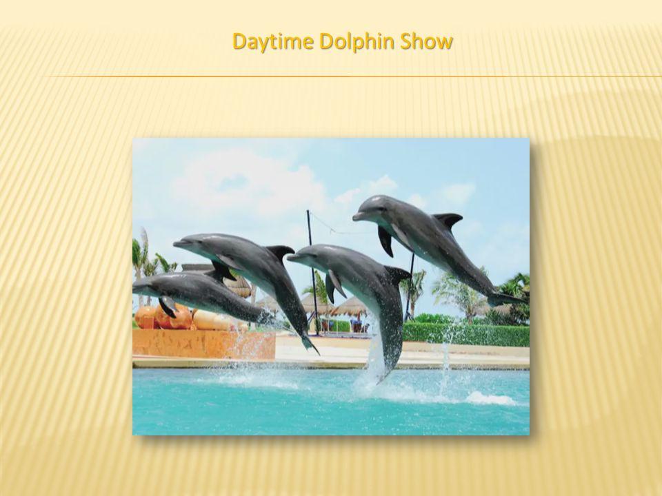 Daytime Dolphin Show
