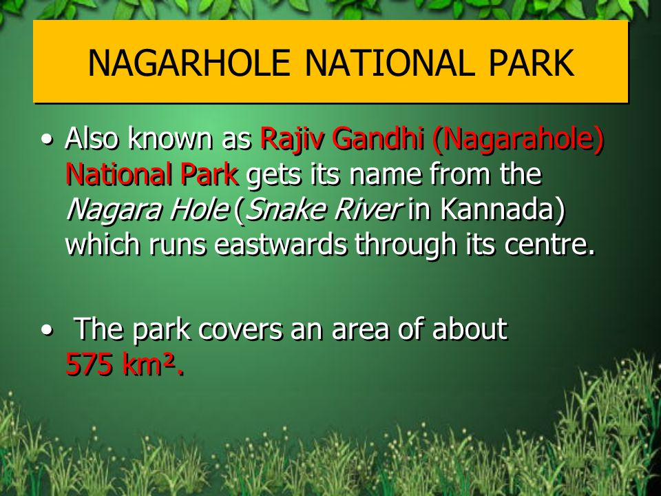 NAGARHOLE NATIONAL PARK Also known as Rajiv Gandhi (Nagarahole) National Park gets its name from the Nagara Hole (Snake River in Kannada) which runs eastwards through its centre.