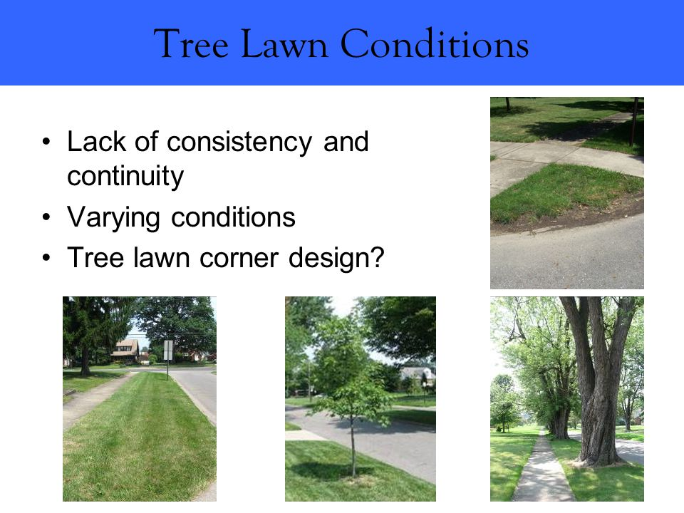 Tree Lawn Conditions Lack of consistency and continuity Varying conditions Tree lawn corner design?