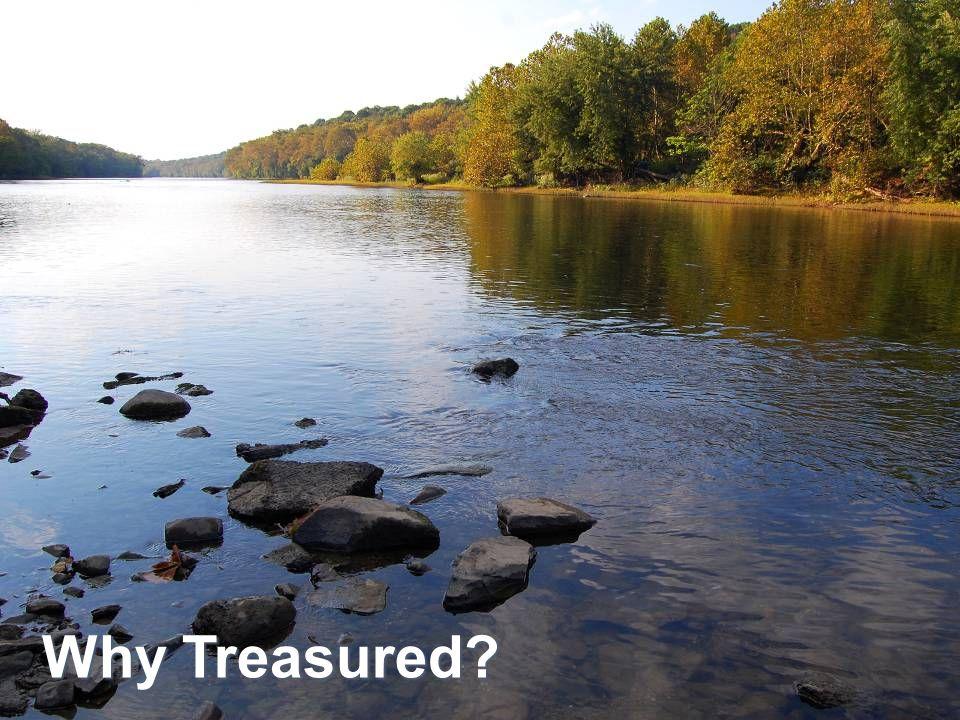 Why Treasured?