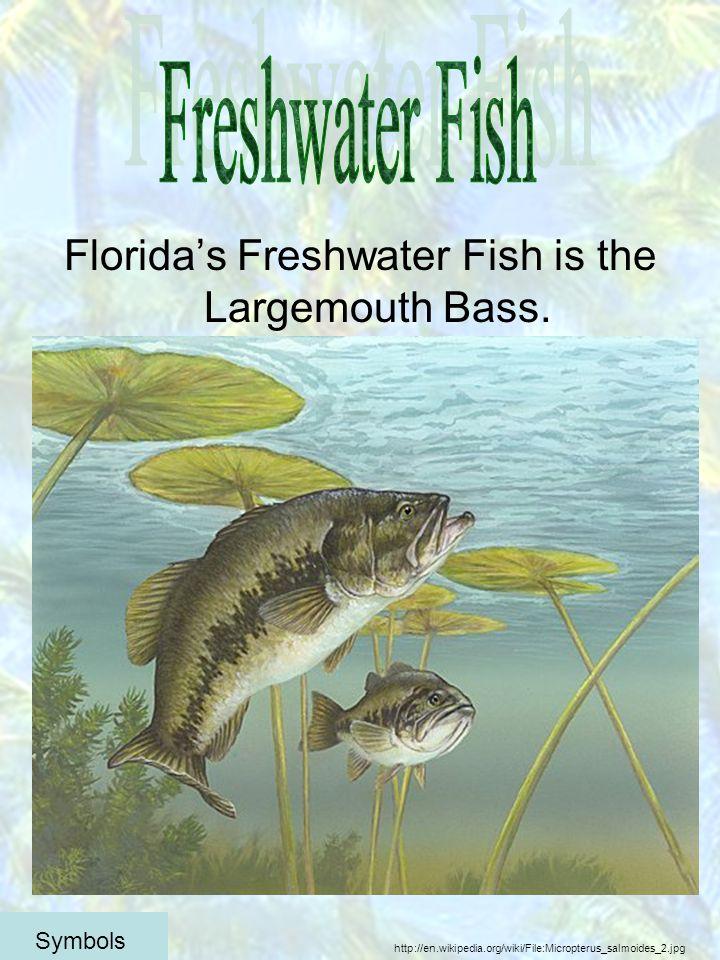 Floridas Freshwater Fish is the Largemouth Bass.