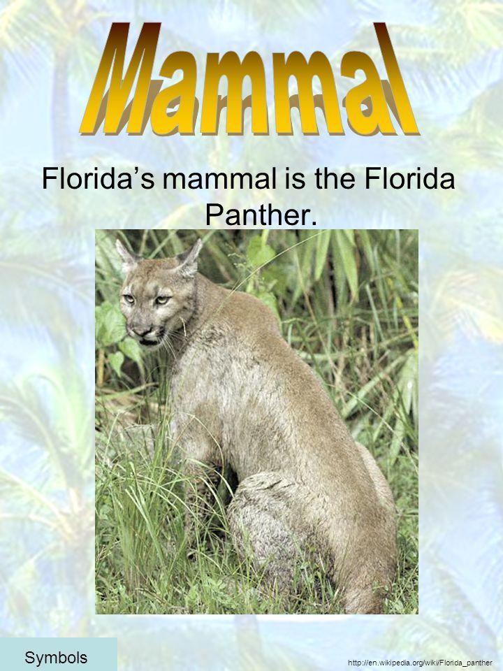 Floridas mammal is the Florida Panther. http://en.wikipedia.org/wiki/Florida_panther Symbols