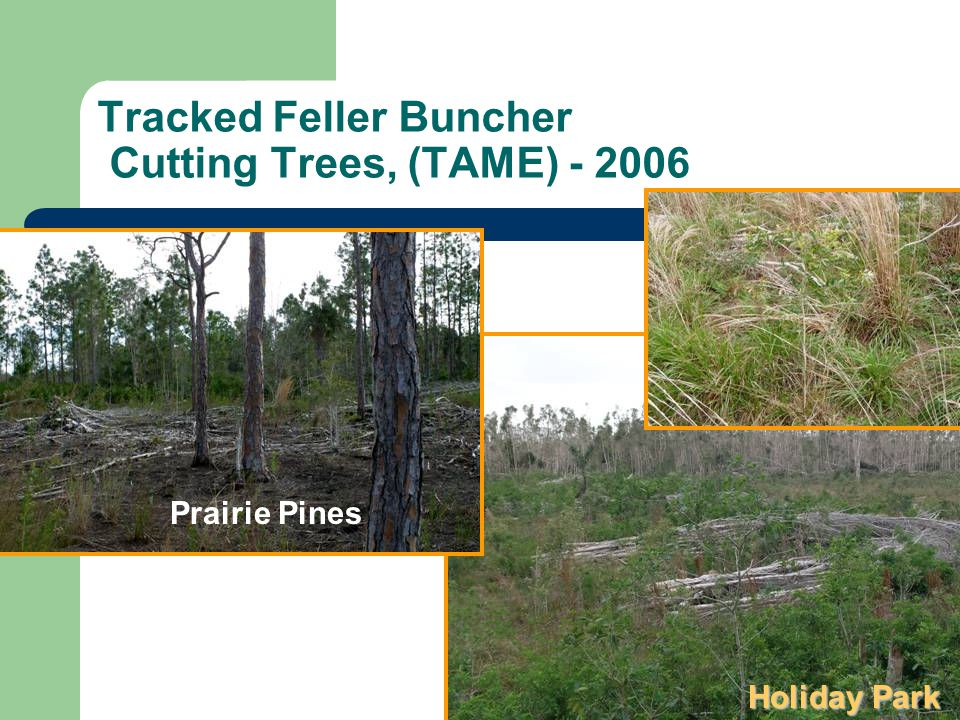 Tracked Feller Buncher Cutting Trees, (TAME) - 2006 Holiday Park Prairie Pines