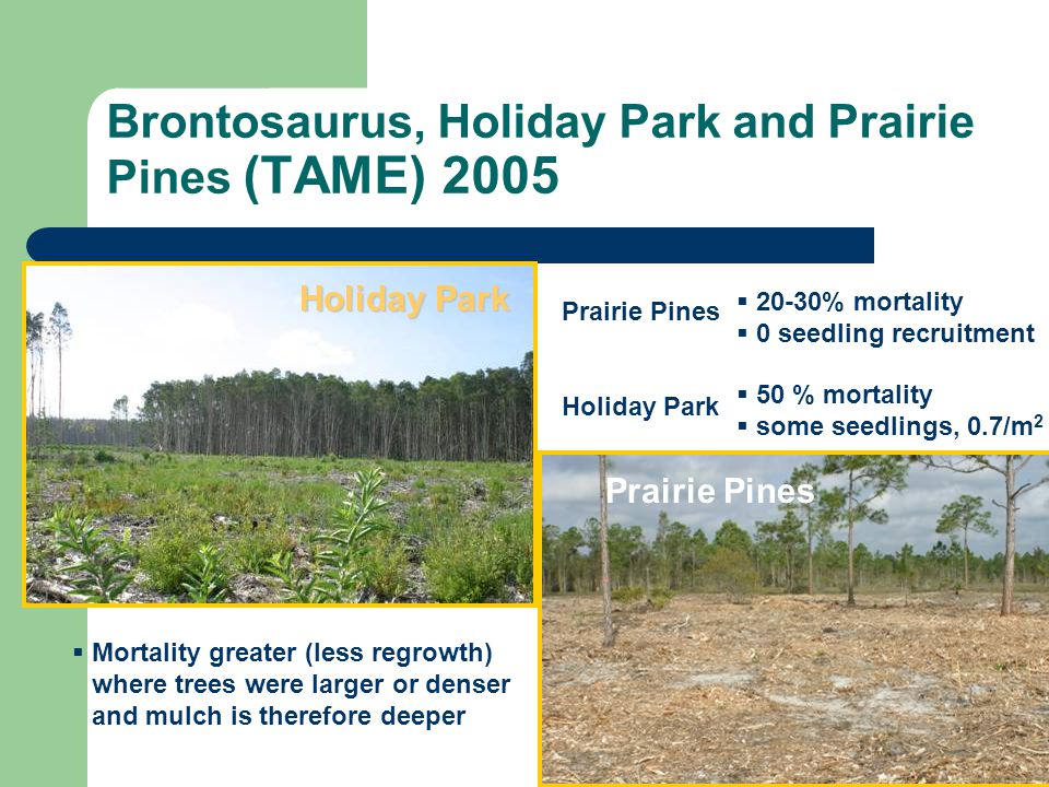 Brontosaurus, Holiday Park and Prairie Pines (TAME) 2005 20-30% mortality 0 seedling recruitment Mortality greater (less regrowth) where trees were la