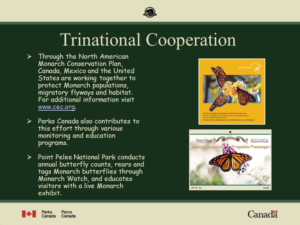 Trinational Cooperation Through the North American Monarch Conservation Plan, Canada, Mexico and the United States are working together to protect Mon