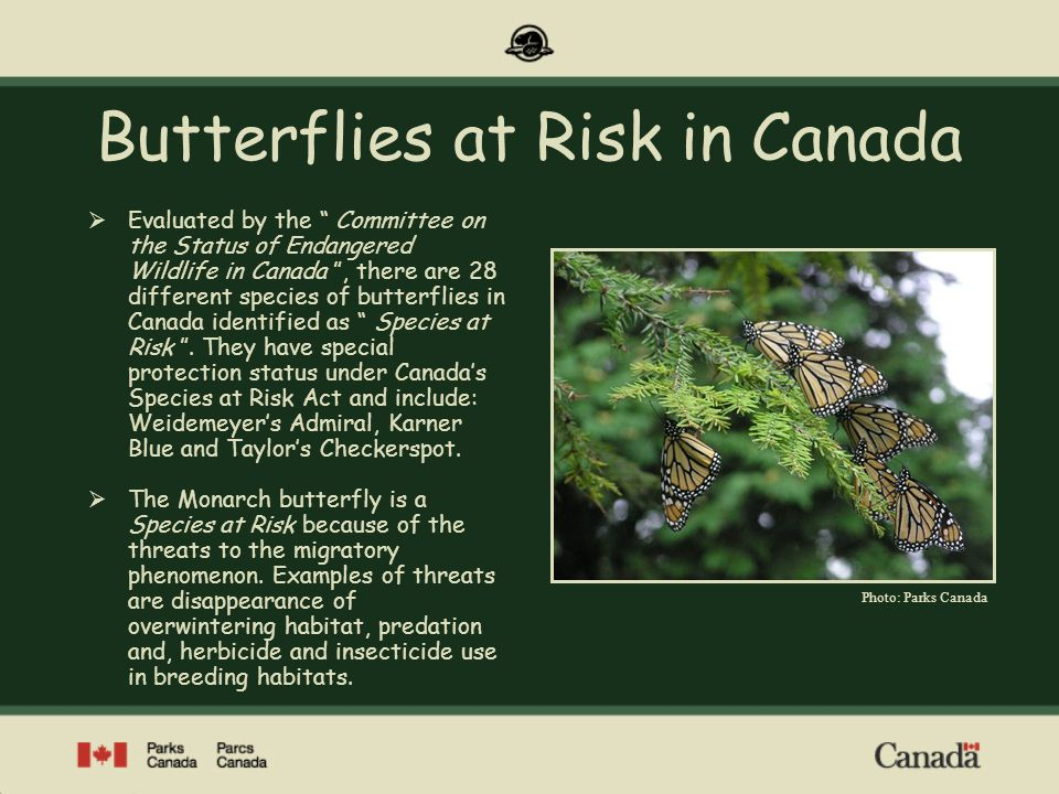 Point Pelee National Park of Canada Canadas Southern Sanctuary Point Pelee National Park is a prime location to observe fall migration of Monarch butterflies on their way to their wintering grounds in the volcanic mountains of central Mexico