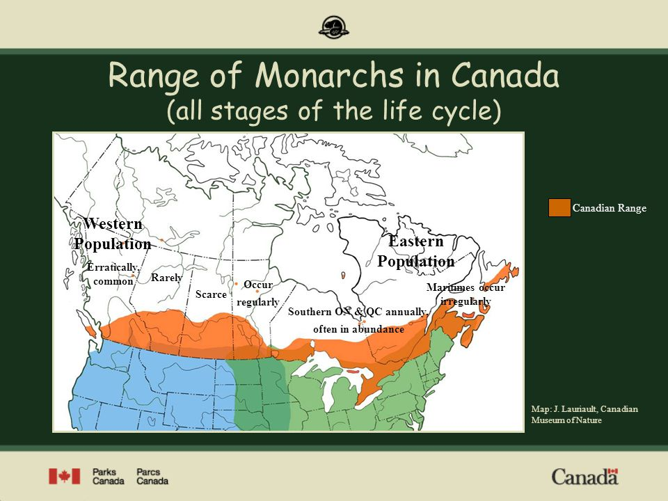 For additional information on Monarch migration at Point Pelee National Park, visit our website at www.pc.gc.ca/point pelee Photos: Parks Canada