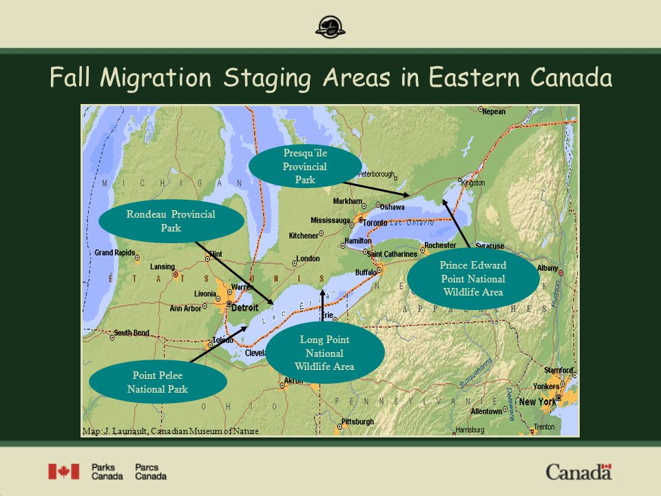 Point Pelee – A Funnel for Migration Image: Parks Canada