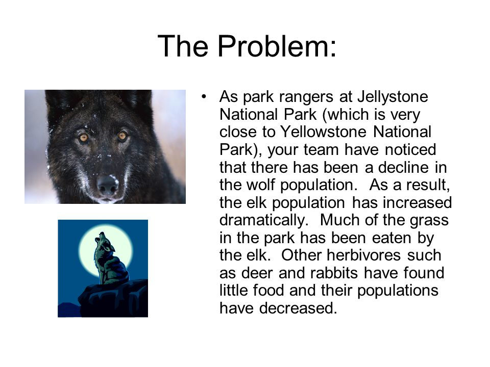 The Problem: As park rangers at Jellystone National Park (which is very close to Yellowstone National Park), your team have noticed that there has been a decline in the wolf population.