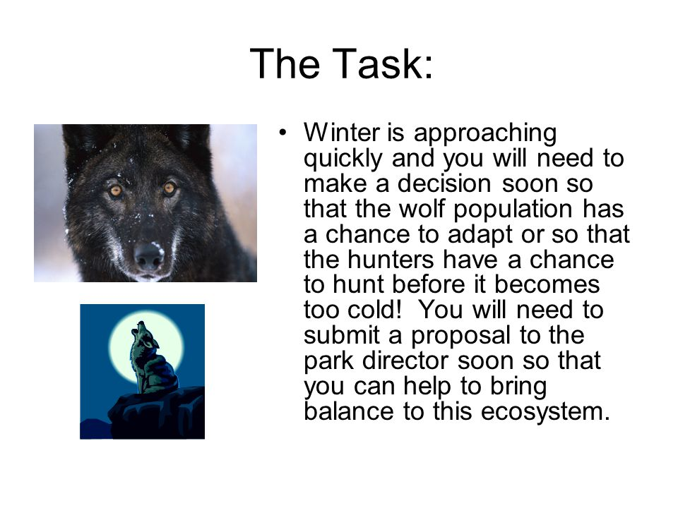 The Task: Winter is approaching quickly and you will need to make a decision soon so that the wolf population has a chance to adapt or so that the hunters have a chance to hunt before it becomes too cold.