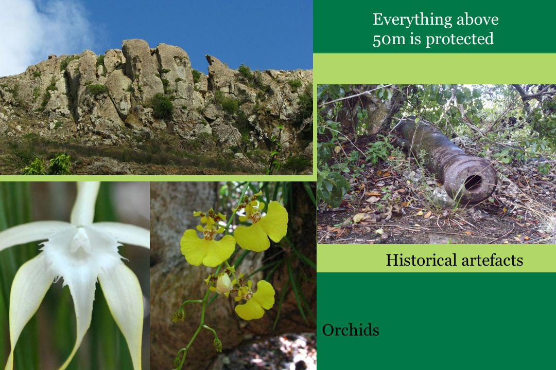 Everything above 50m is protected Orchids Historical artefacts