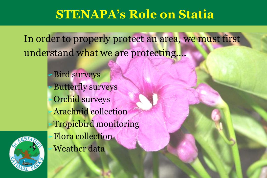 STENAPAs Role on Statia In order to properly protect an area, we must first understand what we are protecting….