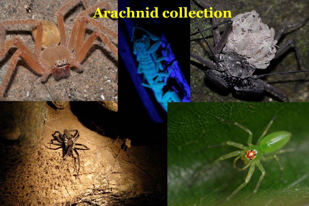 Arachnid collection