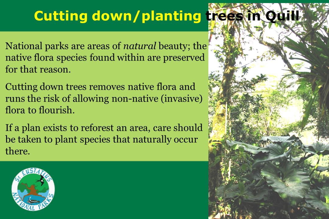 Cutting down/planting trees in Quill National parks are areas of natural beauty; the native flora species found within are preserved for that reason.