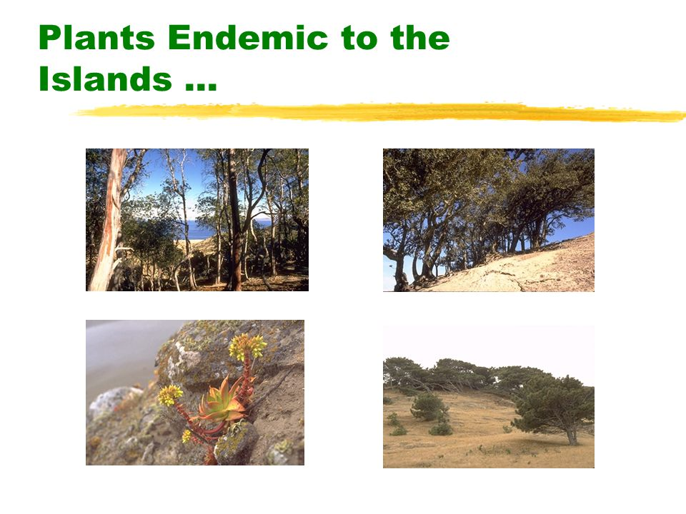 Plants Endemic to the Islands...