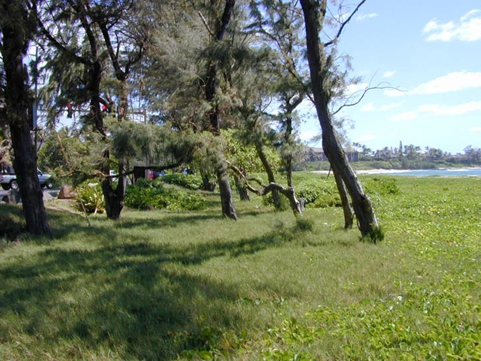 Lydgate Park to Lihi ParkKe Ala Hele Makalae Phase III Pathways Project 33
