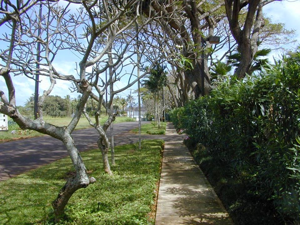 Lydgate Park to Lihi ParkKe Ala Hele Makalae Phase III Pathways Project 52