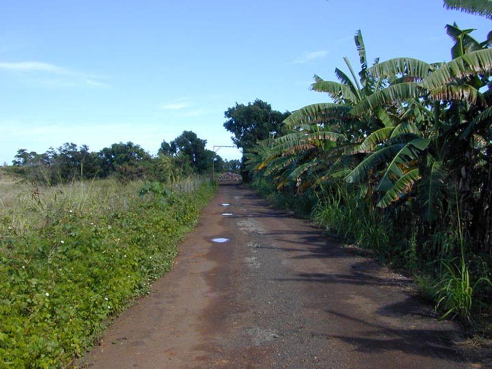 Lydgate Park to Lihi ParkKe Ala Hele Makalae Phase III Pathways Project 57