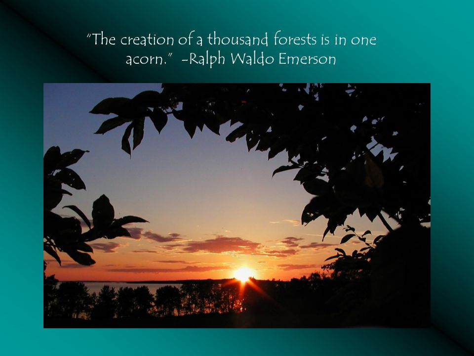The creation of a thousand forests is in one acorn. -Ralph Waldo Emerson