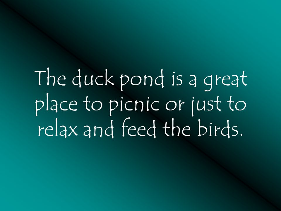 The duck pond is a great place to picnic or just to relax and feed the birds.