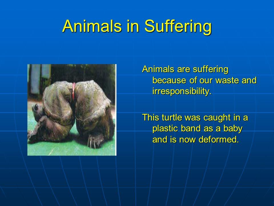 Animals in Suffering Animals are suffering because of our waste and irresponsibility.