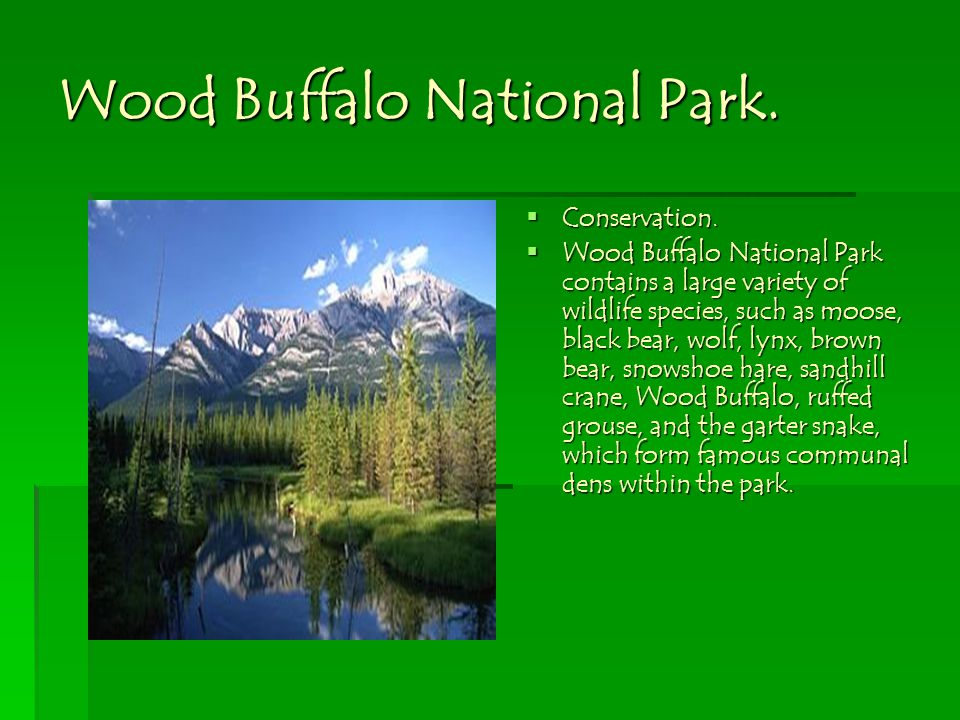 Wood Buffalo National Park. Conservation. Wood Buffalo National Park contains a large variety of wildlife species, such as moose, black bear, wolf, ly