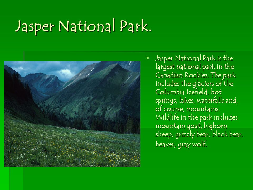 Jasper National Park. Jasper National Park is the largest national park in the Canadian Rockies.