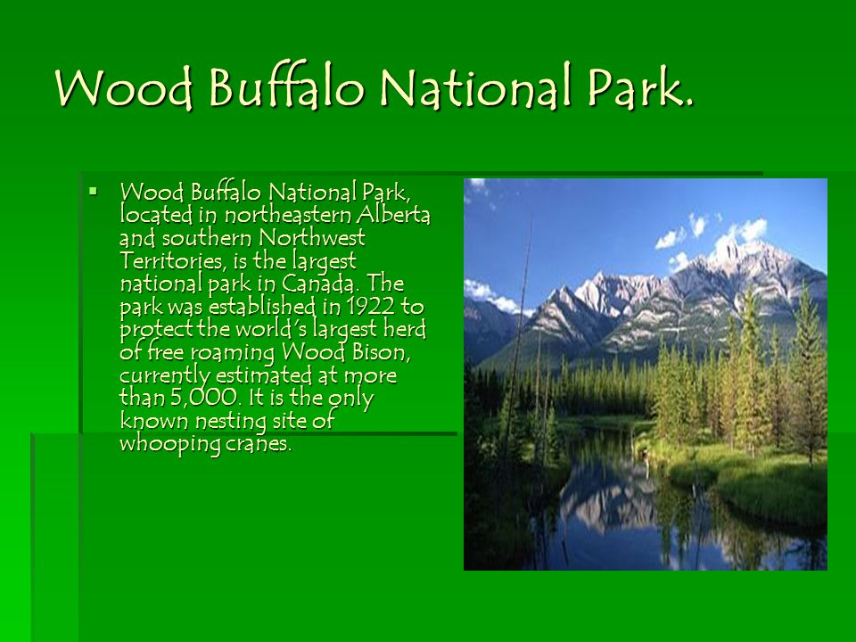 Wood Buffalo National Park.