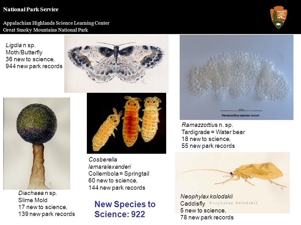 National Park Service Appalachian Highlands Science Learning Center Great Smoky Mountains National Park New Species to Science: 922 Cosberella lamaralexanderi Collembola = Springtail 60 new to science, 144 new park records Ramazzottius n.
