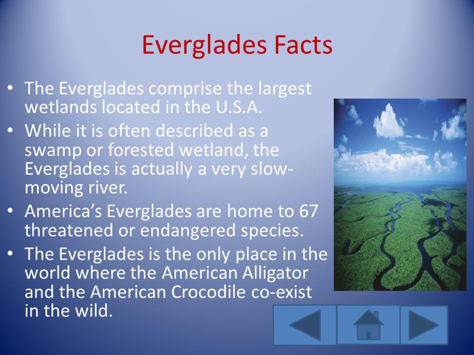 Everglades Facts The Everglades comprise the largest wetlands located in the U.S.A.