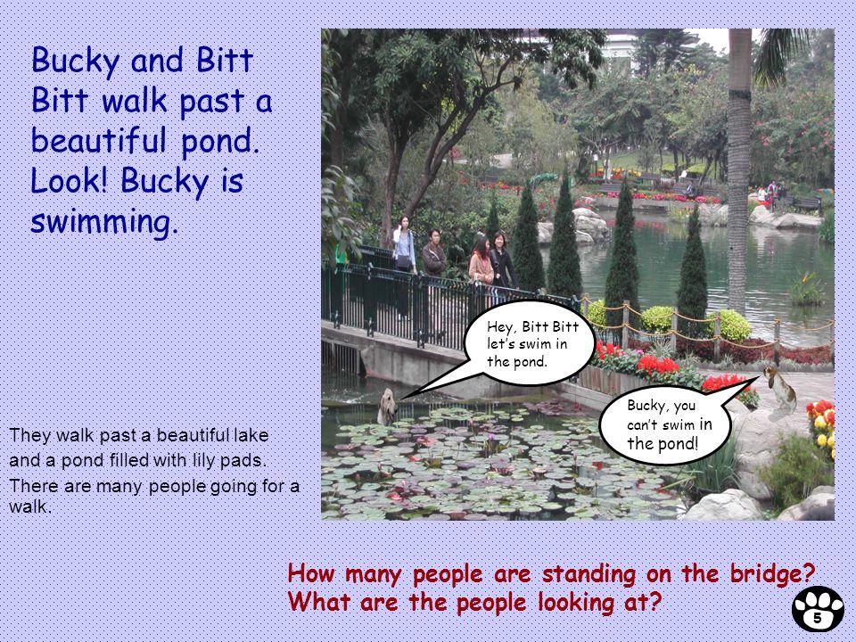Bucky and Bitt Bitt walk past a beautiful pond. Look! Bucky is swimming. Bucky, you cant swim in the pond! Hey, Bitt Bitt lets swim in the pond. How m
