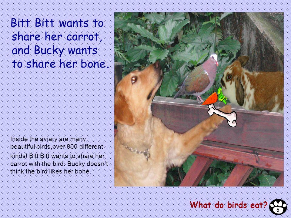 Bitt Bitt wants to share her carrot, and Bucky wants to share her bone.