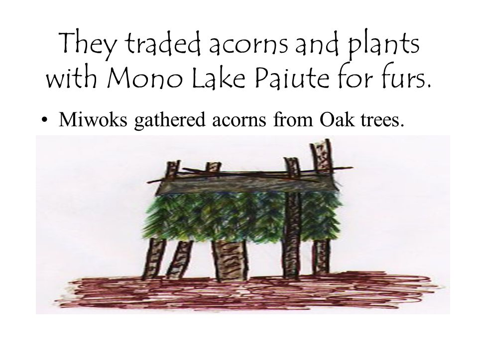 They traded acorns and plants with Mono Lake Paiute for furs.